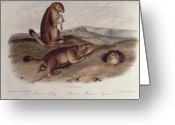 1842 Greeting Cards - Prairie Dog Greeting Card by John James Audubon
