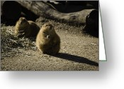 Prairie Dog Greeting Cards - Prairie Dog Sees The Shadow Greeting Card by Trish Tritz