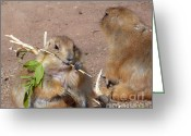 Brown Dogs Digital Art Greeting Cards - Prairie Dogs Greeting Card by Methune Hively