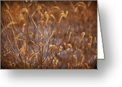 Prairie Native Greeting Cards - Prairie Grass Blades Greeting Card by Steve Gadomski