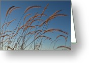 Prairie Native Greeting Cards - Prairie Grass Landscape Greeting Card by Steve Gadomski