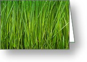 Prairie Native Greeting Cards - Prairie Grass Panorama Greeting Card by Steve Gadomski