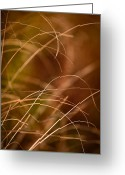 Prairie Native Greeting Cards - Prairie Grasses Number 4 Greeting Card by Steve Gadomski