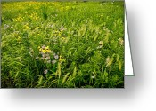Prairie Native Greeting Cards - Prairie Tapestry Greeting Card by Steve Gadomski