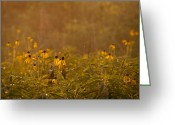 Goose Greeting Cards - Prairie Wildflowers Greeting Card by Steve Gadomski