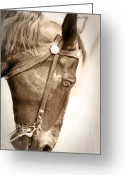Horse Show Greeting Cards - Praying For A Win Greeting Card by Kathy Jennings