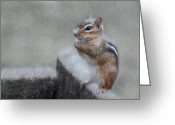 Chipmunk Greeting Cards - Praying for Spring Greeting Card by Lori Deiter