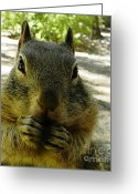 Beach Towel Photo Greeting Cards - Praying nuts Greeting Card by DJ Laughlin