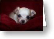 Dog Photographs Greeting Cards - Precious Greeting Card by Christy Hodgin