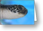 ; Maui Greeting Cards - Precious Honu Sea Turtle Greeting Card by Karon Melillo DeVega