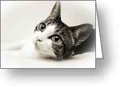 Fine Art Cat Greeting Cards - Precious Kitty Greeting Card by Andee Photography