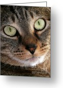 Short Hair Greeting Cards - Precious Kitty Greeting Card by Sabrina L Ryan