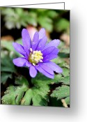 Wildflower Photography Greeting Cards - Precious Greeting Card by Neal  Eslinger