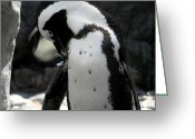 Black Tie Greeting Cards - Preen Greeting Card by Martha Pulrang