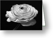 Flower Photos Greeting Cards - Prelude - Black and White Roses Macro Flowers Fine Art Photography Greeting Card by Artecco Fine Art Photography - Photograph by Nadja Drieling