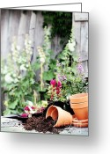 Shed Greeting Cards - Preparing Flower Pots Greeting Card by Stephanie Frey