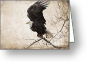 Bird Of Prey Mixed Media Greeting Cards - Preparing for Take Off Greeting Card by Reflective Moments  Photography and Digital Art Images