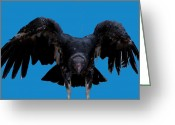 Buzzard Wings Greeting Cards - Pretty Bird NOT Greeting Card by LeeAnn McLaneGoetz McLaneGoetzStudioLLCcom