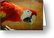 Red Birds Greeting Cards - Pretty Boy Greeting Card by Lois Bryan