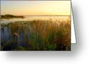 Sunset Light Greeting Cards - Pretty evening at the lake Greeting Card by Susanne Van Hulst