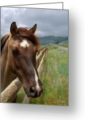 Buckskin Horse Greeting Cards - Pretty Girl Greeting Card by Julie Magers Soulen