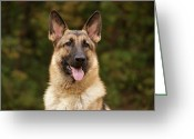 Alsatian Greeting Cards - Pretty Girl Greeting Card by Sandy Keeton