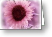 Trish Greeting Cards - Pretty In Pink Greeting Card by Trish Clark
