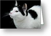 Fine Art Cat Greeting Cards - Pretty Kitty Cat 2 Greeting Card by Andee Photography