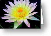 Lilly Pad Greeting Cards - Pretty Lily Greeting Card by Steve McKinzie