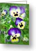 Viola Tricolor Greeting Cards - Pretty Pansy Faces Greeting Card by Cindy Wright