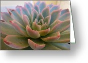Plants Greeting Cards Greeting Cards - Pretty Pastel Greeting Card by Jean Marshall