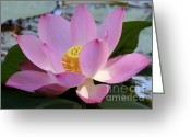 Hawaiian Pond Greeting Cards - Pretty Pink Lotus Greeting Card by Sabrina L Ryan