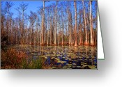 The Swamp Greeting Cards - Pretty Swamp Scene Greeting Card by Susanne Van Hulst