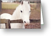 Rail Fence Greeting Cards - Pretty White Pony Looking Over Fence Greeting Card by Sharon Vos-Arnold
