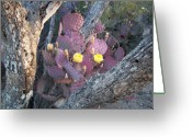 Lisa Bentley Greeting Cards - Prickly Pear bloom in tree 01 Greeting Card by Lisa Bentley