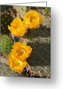 Cacti Greeting Cards - Prickly Pear Cactus Flowers Greeting Card by Jill Reger