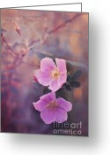 Alberta Greeting Cards - Prickly Rose Greeting Card by Priska Wettstein