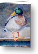 Duck Drawings Greeting Cards - Pride - Male Mallard Greeting Card by Bob Nolin