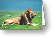 African Cats Greeting Cards - Pride Greeting Card by Sebastian Musial