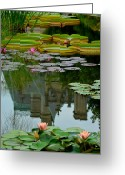 Frog Prince Greeting Cards - Prince Charmings Lily Pond Greeting Card by Robert Harmon