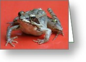Frog Prince Greeting Cards - Prince In Disguise Greeting Card by Barbara S Nickerson