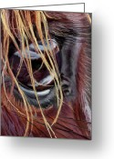 Horse Art Pastels Greeting Cards - Princess Wild Heart Greeting Card by Kim McElroy