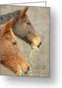 Quarter Horses Greeting Cards - Profile Greeting Card by Maria Varnalis