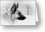 Purebreed Greeting Cards - Profile Of A German Shepherd Greeting Card by Angie McKenzie