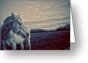 Horse Art Giclee Greeting Cards - Profile of a Horse Greeting Card by Toni Hopper