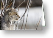 Cat Profile Greeting Cards - Profile of a Lynx Greeting Card by Tim Grams