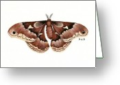 Nature Study Painting Greeting Cards - Promethea Moth Greeting Card by Betsy Gray