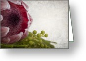 Copyspace Greeting Cards - Protea Greeting Card by Jane Rix
