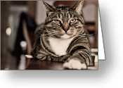 Animal Portrait Greeting Cards - Proud Cat Greeting Card by Olga Tremblay