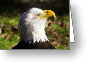 Raptor Photography Greeting Cards - Proud Eagle Greeting Card by David Lee Thompson